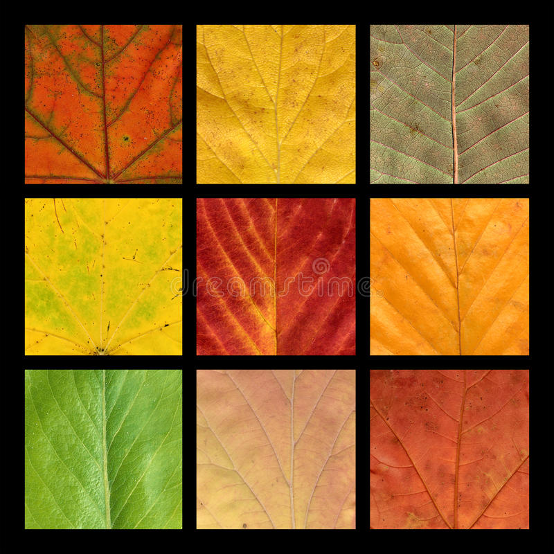 Barwione Liść Mozaiki Dziewięć żyły Zdjęcia Stock