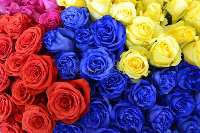 Barwione róże zdjęcie stock