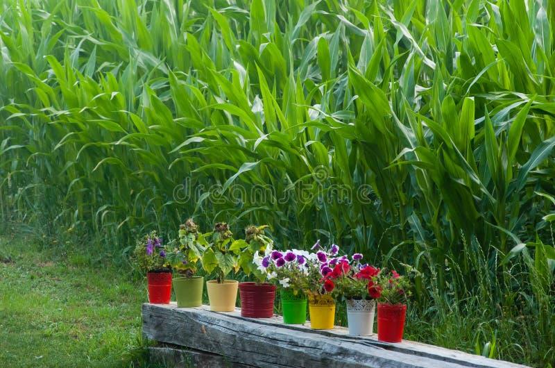 Barwione wazy kwiaty zdjęcie royalty free