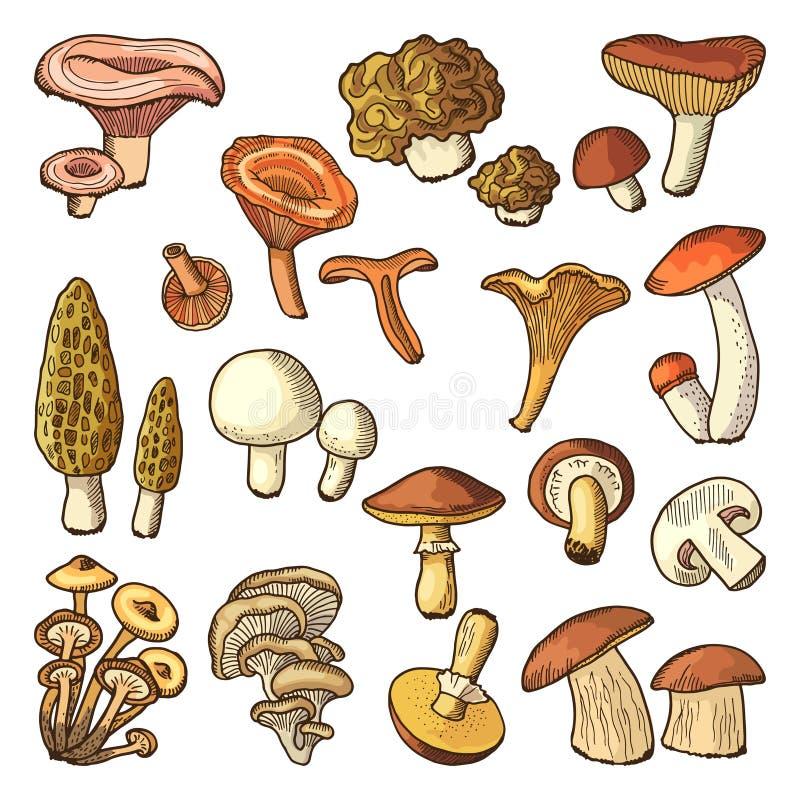 Barwionej natury wektorowe ilustracje pieczarki Trufle i chanterelle, śliski royalty ilustracja