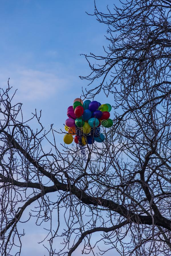 Barwioni balony wtykali w gałąź drzewo, Praga, republika czech zdjęcia royalty free