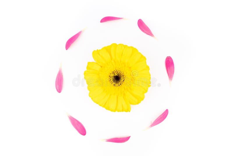 Barwioni gerbera kwiaty obraz royalty free