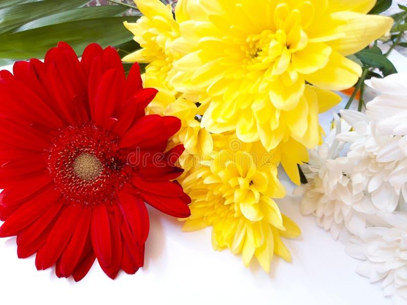 Barwioni kwiaty odizolowywający na bielu obrazy royalty free
