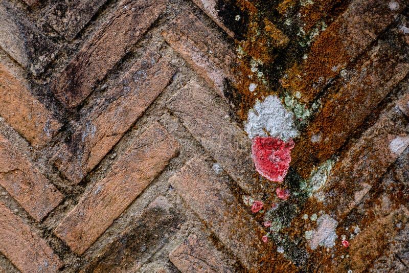 Barwiony ściana z cegieł pełno liszaj i grzyb obrazy stock