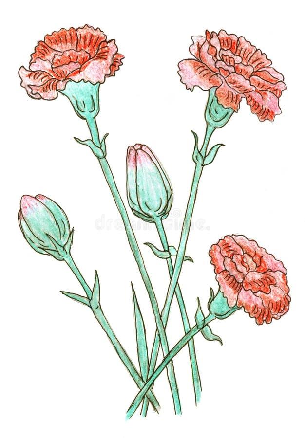 barwiony goździka rysunek ilustracja wektor