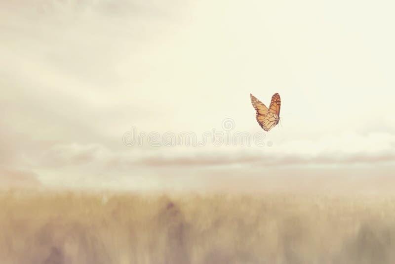 Barwiony motyli latanie uwalnia po środku natury zdjęcie royalty free