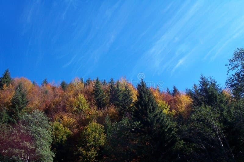 barwy jesieni obraz stock