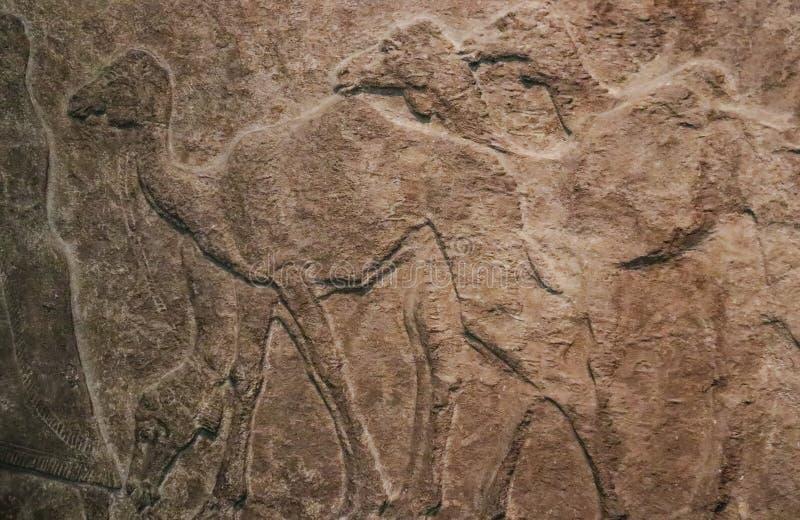 Bas lättnad av kamel i rad sned ungefärligt i stenen - egyptisk forntid - bakgrund arkivfoton