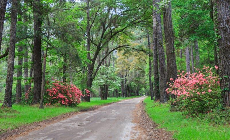 Bas pays la Caroline du Sud de route arrière photographie stock