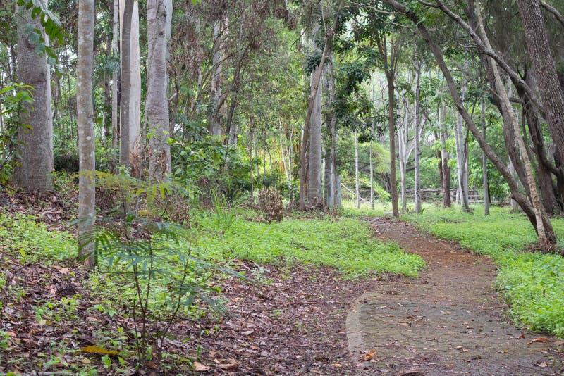 Basaltgullyen parkerar, Mareeba, Queensland - pre-förstörelse royaltyfria foton
