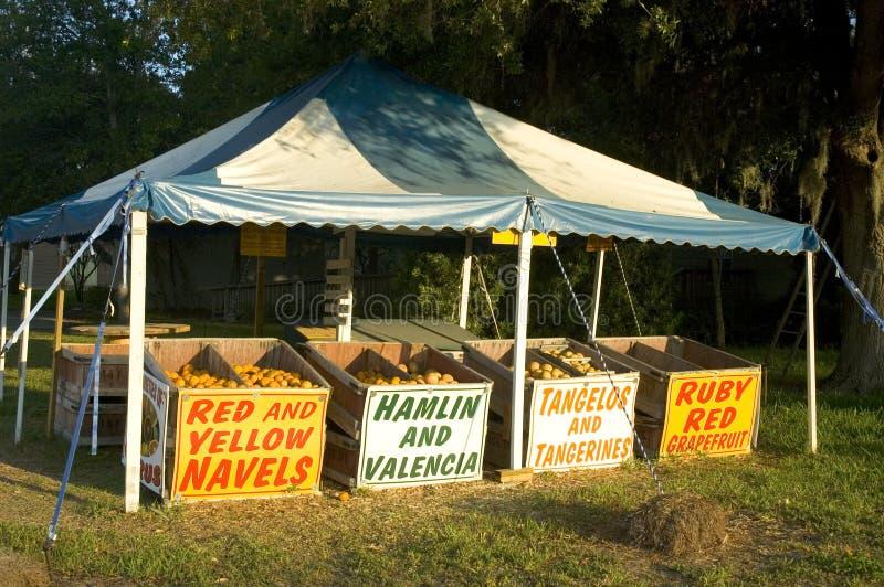 Basamento degli agrumi fotografia stock libera da diritti