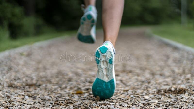Basculador fêmea em uma trilha entre árvores fotografia de stock royalty free