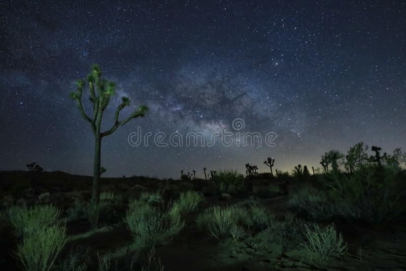 Base azul de la vía láctea en el desierto de Joshua Tree National Park fotos de archivo libres de regalías