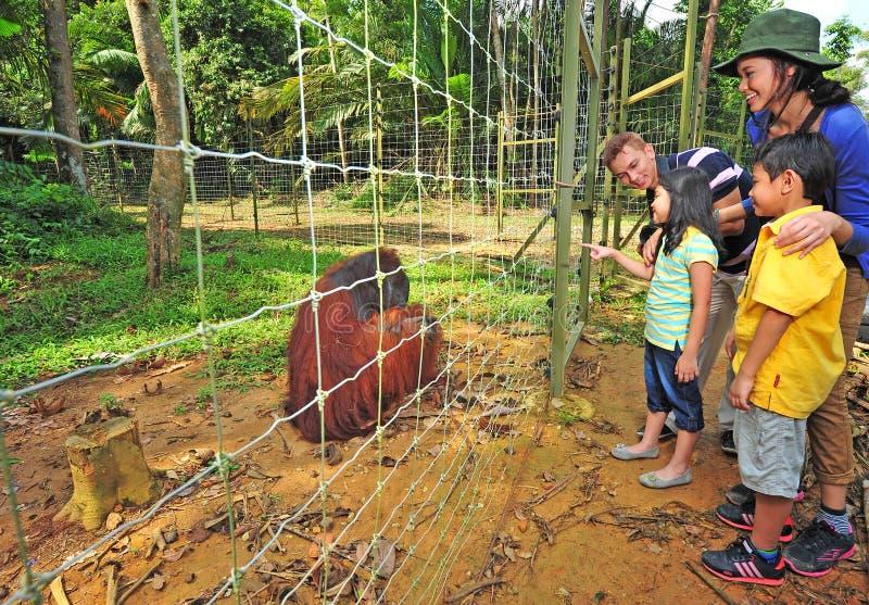 Base d'île d'Utan d'orang-outan de Bukit Merah photos stock