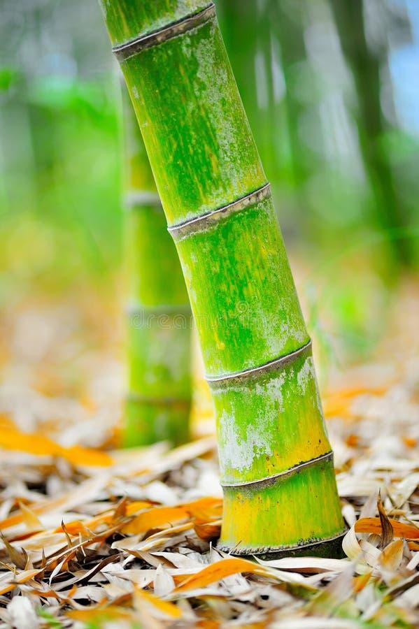 Base de bambu 01 fotografia de stock