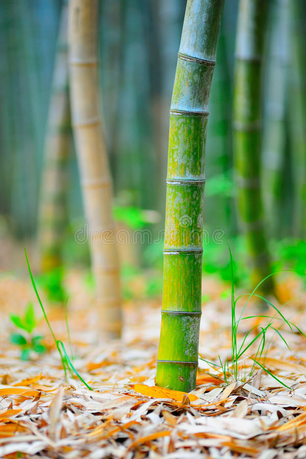 Base de bambu 02 fotografia de stock