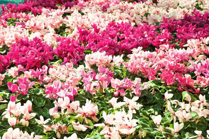 Base di fiore immagini stock