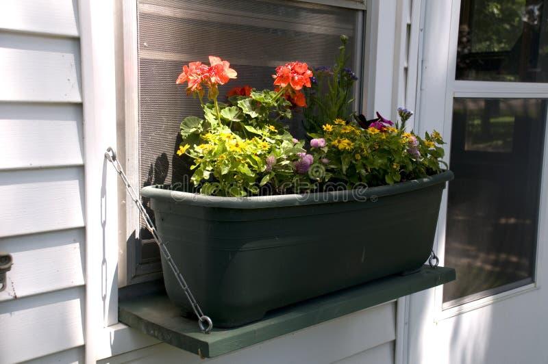 Base di fiore sul davanzale della finestra fotografie stock libere da diritti