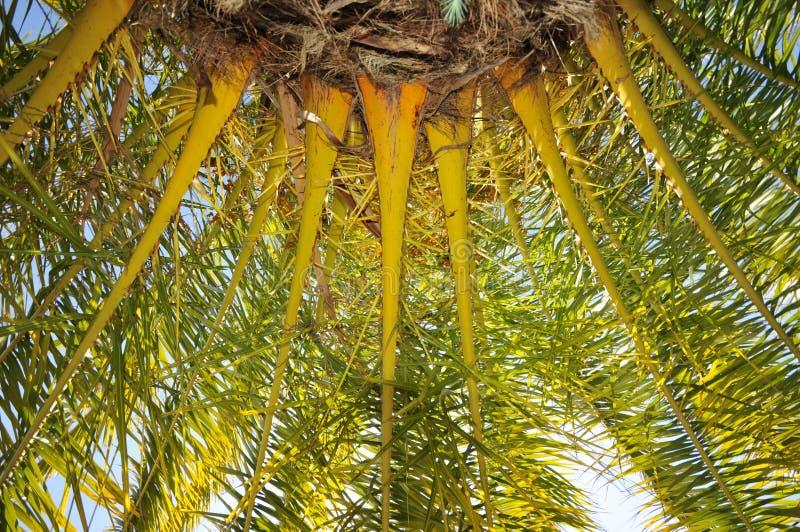 Base e filiais da palmeira com céu imagens de stock