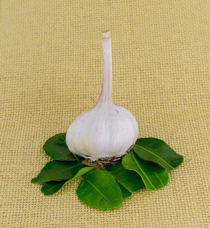 Base entera fresca de la cebolla blanca del ajo de los platos que dan el aroma y el gusto de la salsa y de la carne imagen de archivo libre de regalías