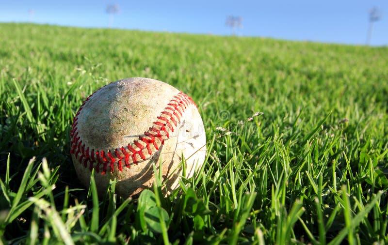 Baseball di vettore su erba royalty illustrazione gratis