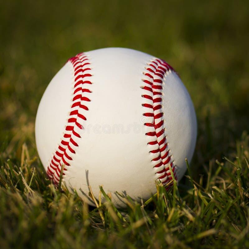 Baseball på fältet. Ny vit boll på grönt gräs arkivfoto