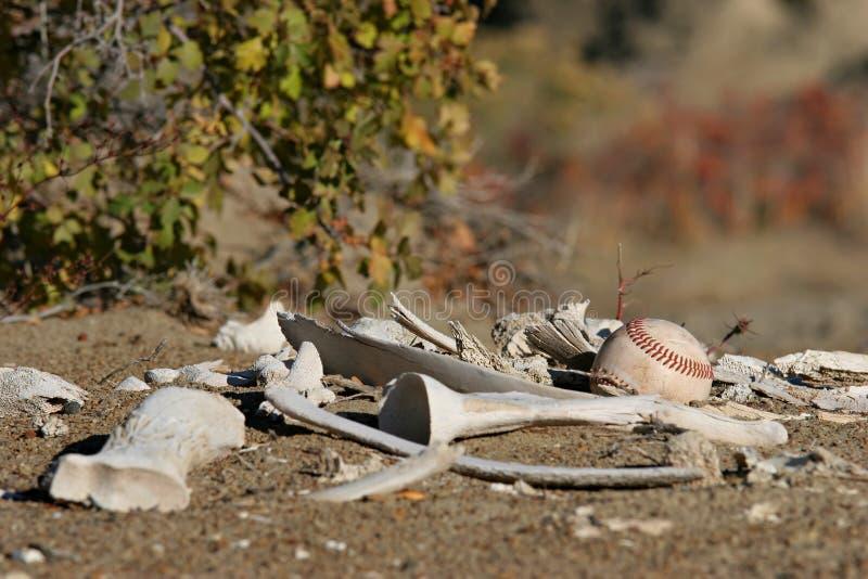 Download Baseball Som Löjligt Förloras Fotografering för Bildbyråer - Bild av blurriness, wasteland: 281585