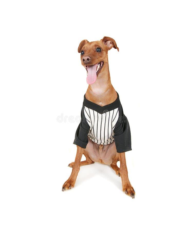 Baseballhund stockfotografie
