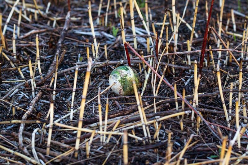 Basebol perdido ou rejeitado que coloca em um prado em um parque fotografia de stock royalty free