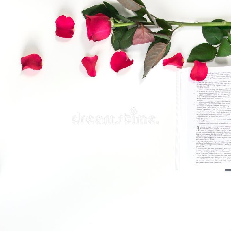 Baselland, Suíça - 30 04 2019 Rosa vermelha, pétalas vermelhas e uma Bíblia em uma tabela branca Limpe o fundo branco imagens de stock
