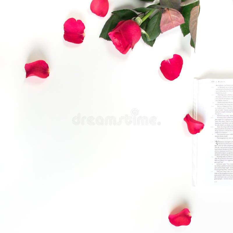 Baselland, Su??a - 30 04 2019 Rosa vermelha, p?talas vermelhas e uma B?blia em uma tabela branca Limpe o fundo branco imagem de stock royalty free