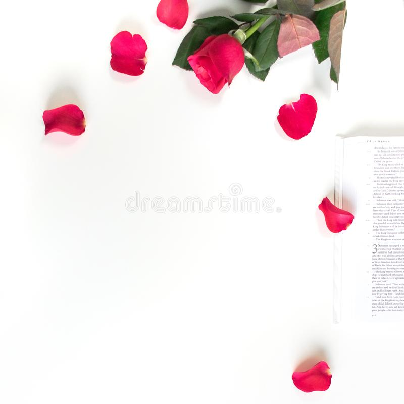 Baselland, Szwajcaria - 30 04 2019 Rewolucjonistki r??a, czerwoni p?atki i biblia na bia?ym stole, Czy?ci bia?ego t?o obraz royalty free