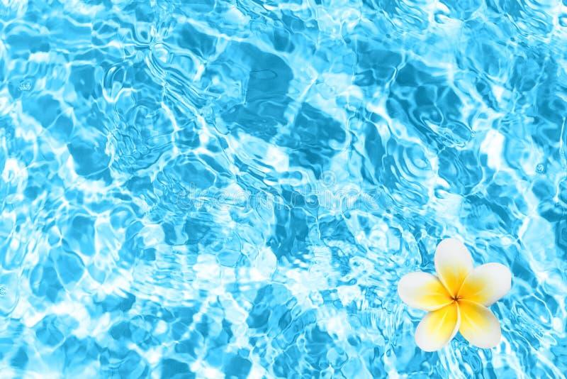 Basen woda z góry Błękitne wody tekstura z tropikalnym kwiatem zdjęcie stock
