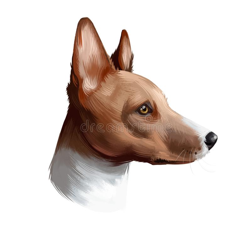 Basenji breed of hunting dog digital art illustration isolated on white. Profile portrait of ancient basal breed Basenji, cute vector illustration