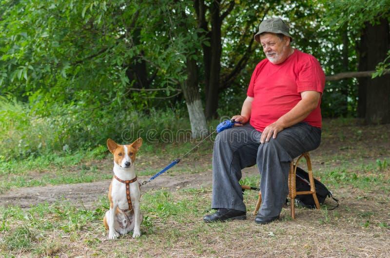 Basenji-Hund, der aus den Grund wartet bis sein älteres Vorlagenendliegen und aktives Spiel mit reizendem Hund sitzt lizenzfreie stockbilder