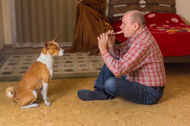 Basenji-Hund, der in einem Schlafzimmer mit geschlossenem Auge sitzt und der Meister spielt mit Pfeife hört lizenzfreies stockfoto