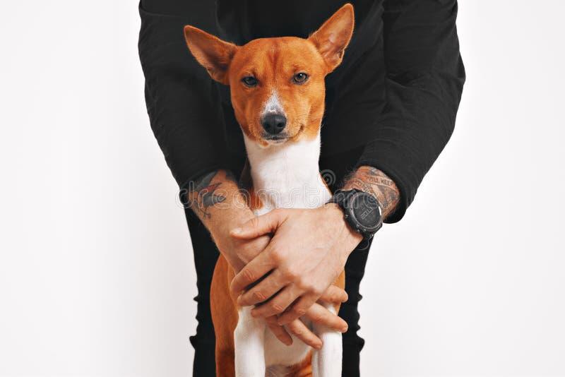 Basenji hund som kramas av ägaren royaltyfria bilder