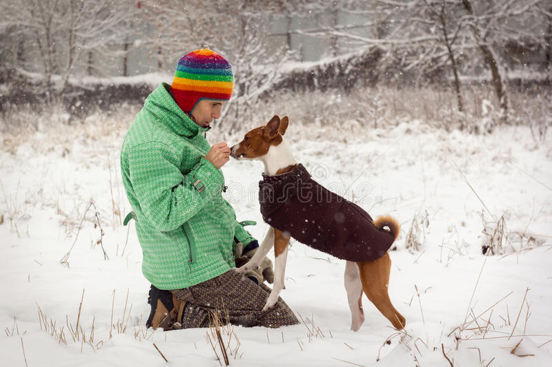 Basenji in the snow. stock images