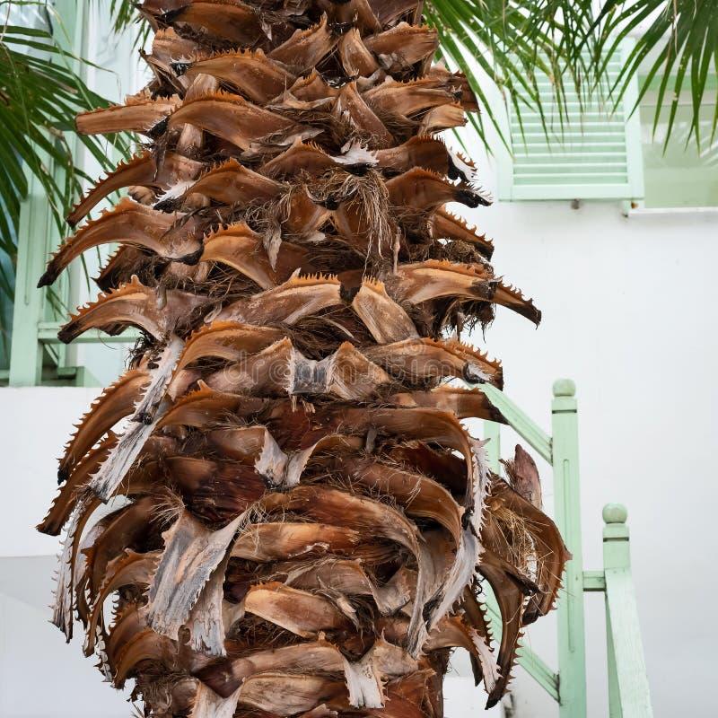 Bases de la hoja en el tronco de una palmera imagen de archivo