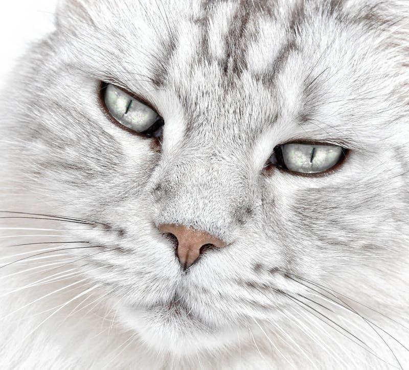 Basette bianche del gatto