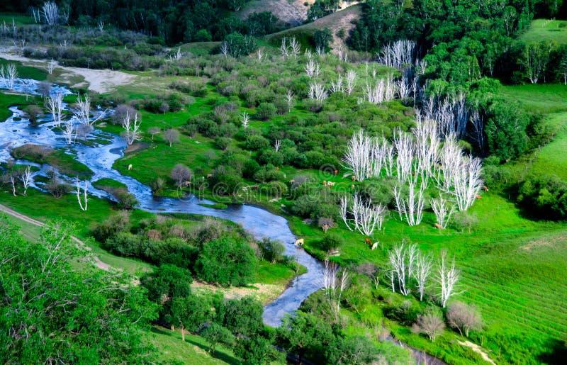 Download BaShang大草原 库存照片. 图片 包括有 劈裂, 绿色, 结构树, 蒙古, 那里, 内在, beautifuler - 59112186