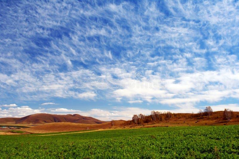 Download Bashang Grassland In Autumn, Good Harvest Stock Image - Image: 8549109
