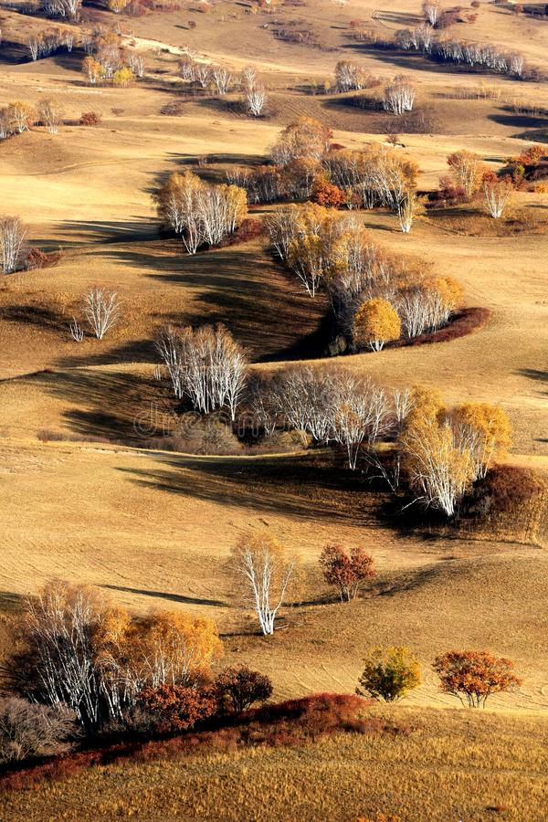 Landscape of Bashang Grasslands. Bashang Grasslands covers about 16,000 square kilometres 6,200 sq mi of northwest Hebei and bordering areas of Inner Mongolia in stock photography