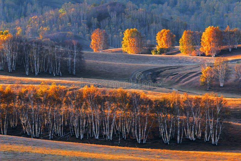 Bashang obszar trawiasty w jesieni obrazy royalty free