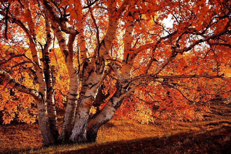 Bashang obszar trawiasty w jesieni zdjęcia royalty free