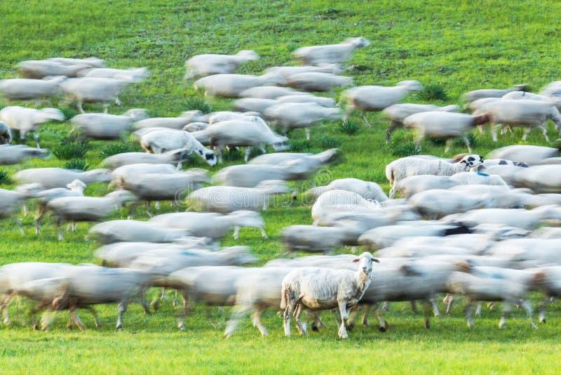 Bashang obszar trawiasty w lecie zdjęcie royalty free