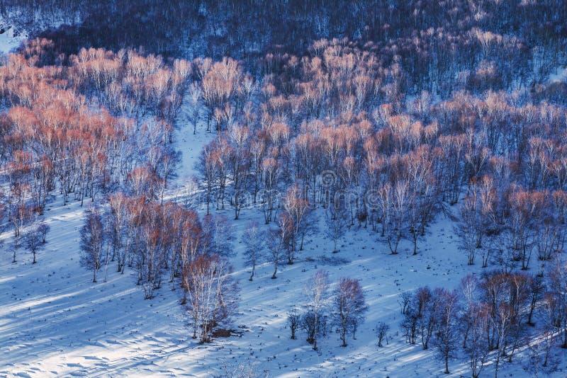 Bashang obszar trawiasty w zimie zdjęcie stock