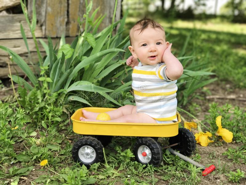 Bashful, coy baby boy in yellow wagon. Little baby boy in yellow wagon with country barn and Iris background royalty free stock image