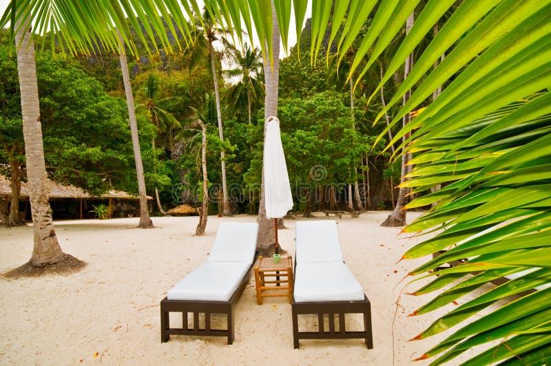 basi della spiaggia dietro la palma immagine stock