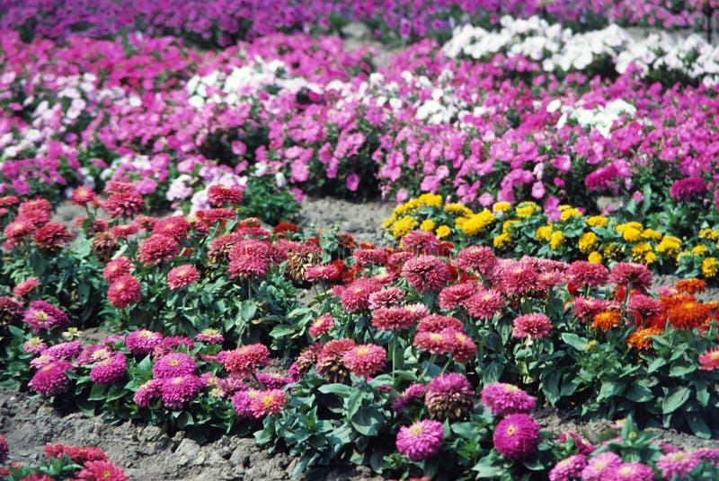 Download Basi di pianta fotografia stock. Immagine di pianta, bellezza - 7314172